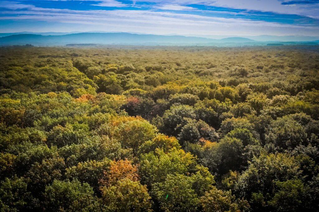 Forêt de Seillon @ Sébastien Tournier