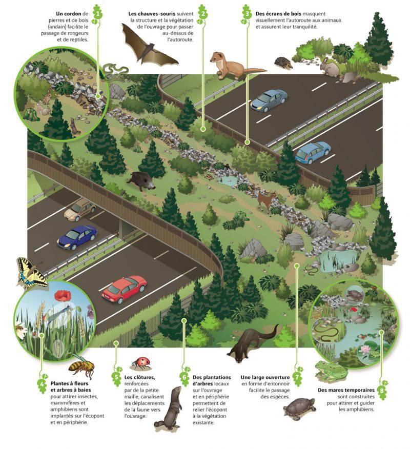 La flore a été pensé pour permettre à une divertsité de faune d'emprunter l'écopont de Péron : cerf, sanglier, reptiles, amphibien, crapaud, hérisson, lapin, chauve-souris, renard...